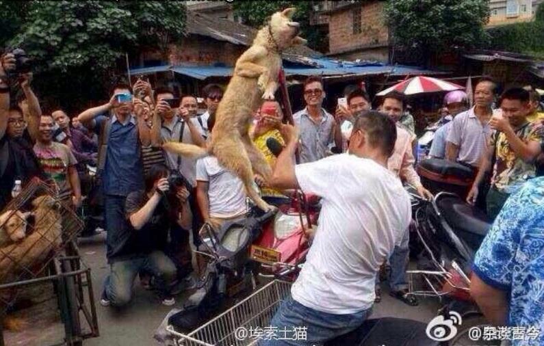 Vice yulin dog festival dogs