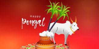 pongal festival images