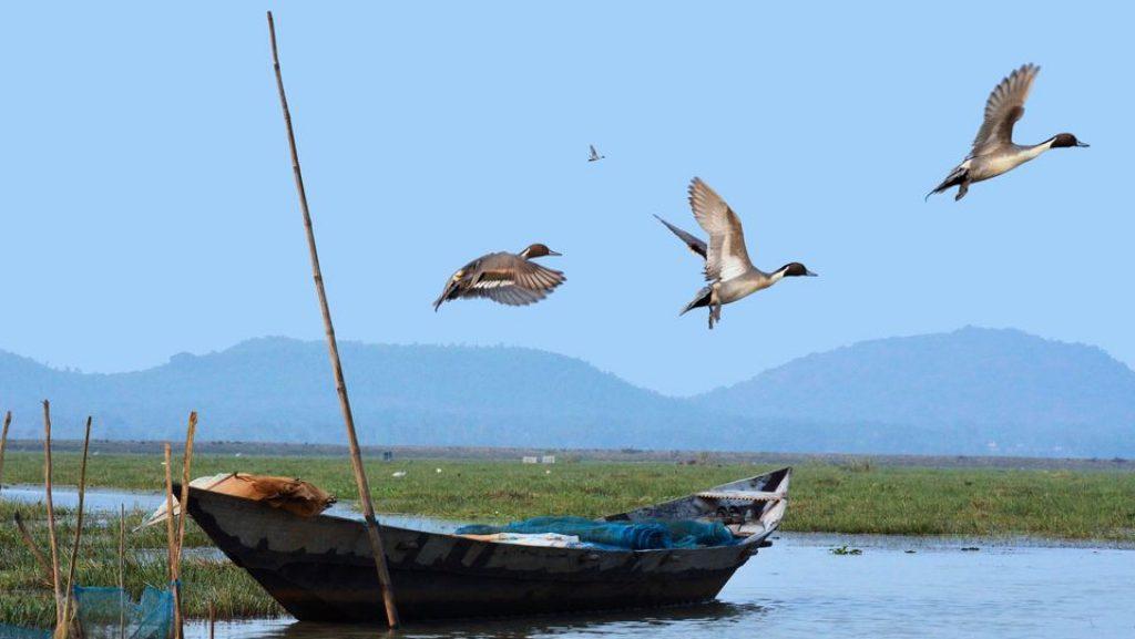 Mangalajodi, Odisha
