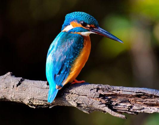 bird-sanctuaries-in-india