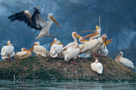 keoladeo-ghana-national-park-rajasthan